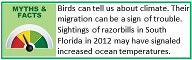 Bird migration fact