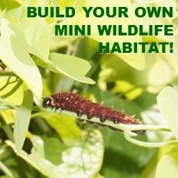 Build a Mini Habitat