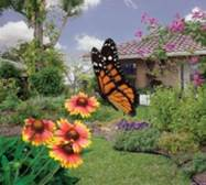 Local House with Florida-Friendly Landscaping and Butterfly