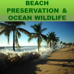 Beach Preservation & Ocean Wildlife Tile