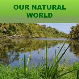 Our Natural World