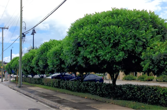 How Are Trees Used As Natural Resources